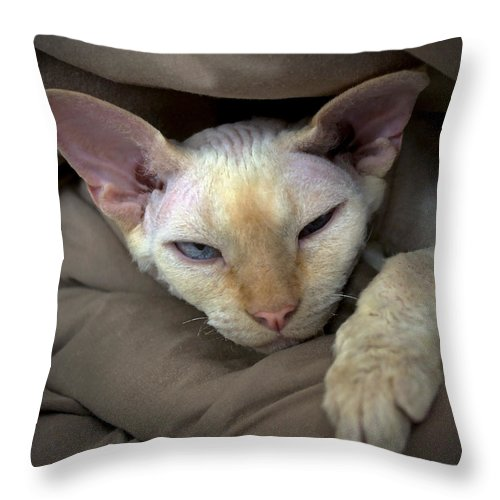 Devon Throw Pillow featuring the photograph Sleepy Oliver 1 by Glennis Siverson