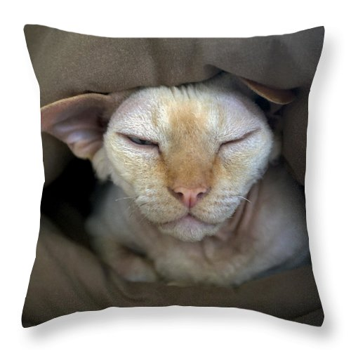 Devon Throw Pillow featuring the photograph Sleepy Oliver 2 by Glennis Siverson