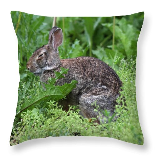 Wildlife Throw Pillow featuring the photograph Sleepy Time by Lori Tordsen