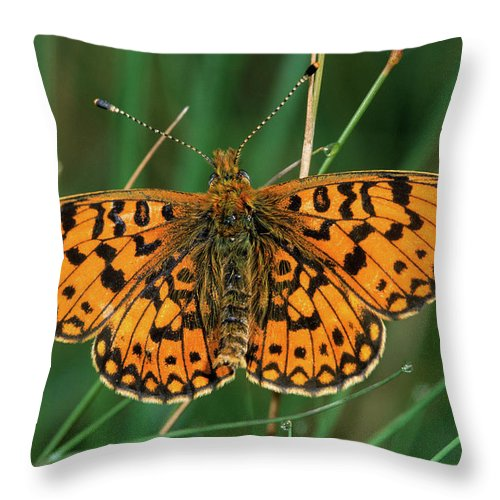 Fn Throw Pillow featuring the photograph Small Pearl-bordered Fritillary by Roel Hoeve