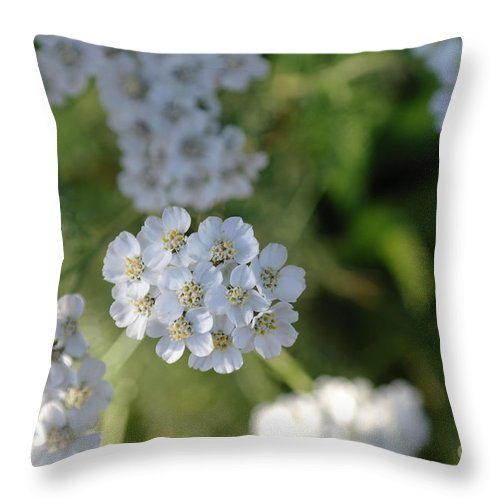 White Flowers Throw Pillow featuring the photograph Small White Wildflowers by Jeff Swan