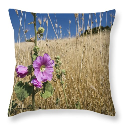 Mp Throw Pillow featuring the photograph Smaller Tree-mallow Lavatera Cretica by Konrad Wothe