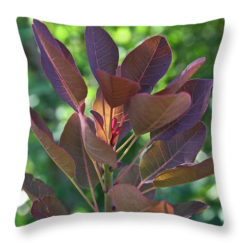 Outdoors Throw Pillow featuring the photograph Smoke Bush by Susan Herber
