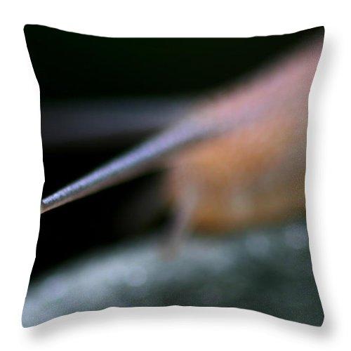 Snail Throw Pillow featuring the photograph Snail by Henrik Lehnerer