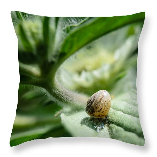 Androgynous Throw Pillow featuring the photograph Snail On The Leaf by Michael Goyberg