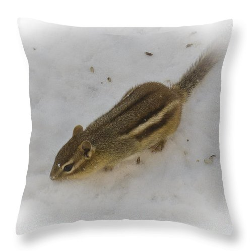 Animals Throw Pillow featuring the photograph Snow Covered Chippy by LeeAnn McLaneGoetz McLaneGoetzStudioLLCcom