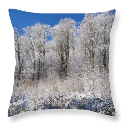 Blue Sky Throw Pillow featuring the photograph Snow Covered Maple Trees Iron Hill by David Chapman