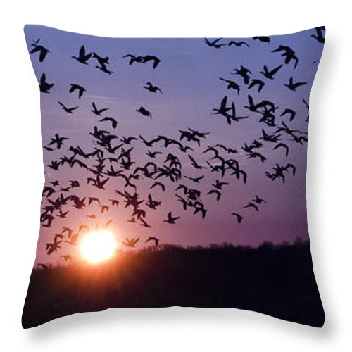 Snow Geese Throw Pillow featuring the photograph Snow Geese Migrating by Crystal Wightman
