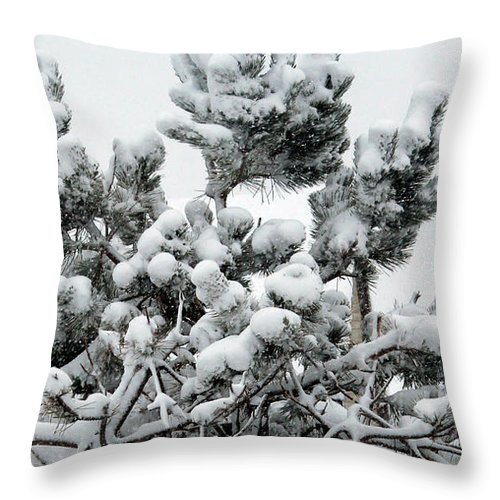 Snow Throw Pillow featuring the photograph Snow On The Pines by Barbara Griffin