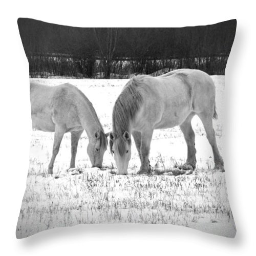 Animal Photograph Throw Pillow featuring the photograph Snow White Beauties by Ms Judi