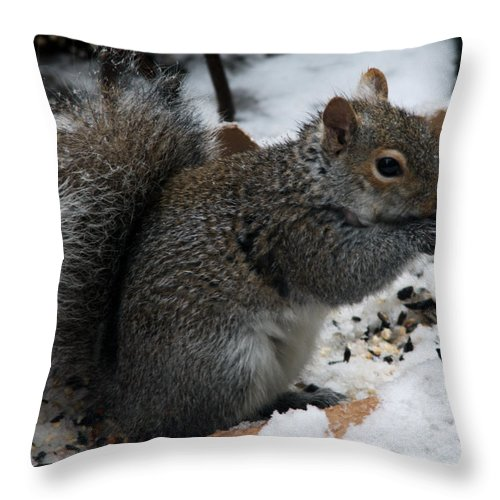 Squirrel Throw Pillow featuring the photograph Snows Of The Equinox by Barry Doherty