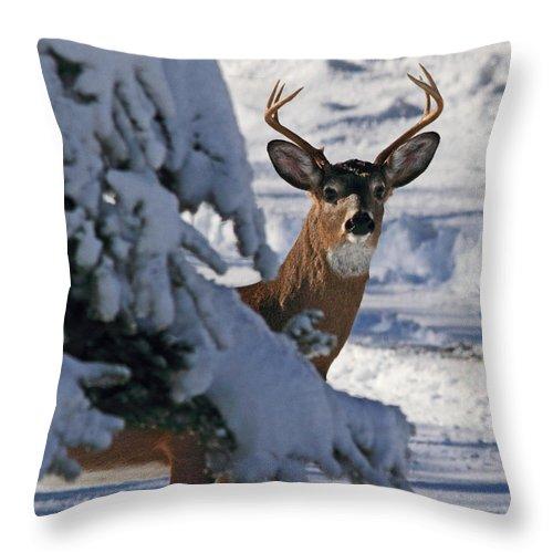 Deer Throw Pillow featuring the photograph Snowy Buck by Lloyd Alexander