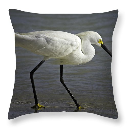 Bird Throw Pillow featuring the photograph Snowy Egret By The Lagoon by Fran Gallogly