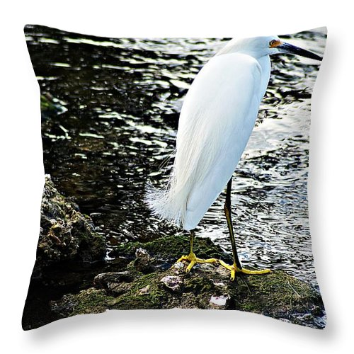 Snowy Throw Pillow featuring the photograph Snowy Egret by Joe Faherty