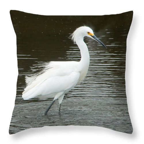 Birds Throw Pillow featuring the photograph Snowy Egret by Regina Geoghan