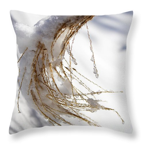 Snow Throw Pillow featuring the photograph Snowy Fountain Grass by Jeff Galbraith