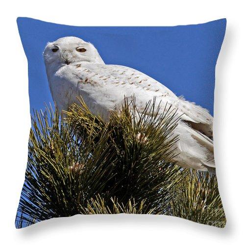 Snowy Owl Throw Pillow featuring the photograph Snowy Owl High Perch by Lloyd Alexander
