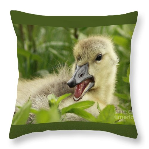 So Much To Say So Little Time For A Gosling Throw Pillow featuring the photograph So Much To Say So Little Time For A Gosling by Inspired Nature Photography Fine Art Photography