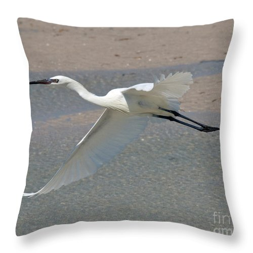 Birds Throw Pillow featuring the photograph Soaring Snowy Egret by Stephen Whalen