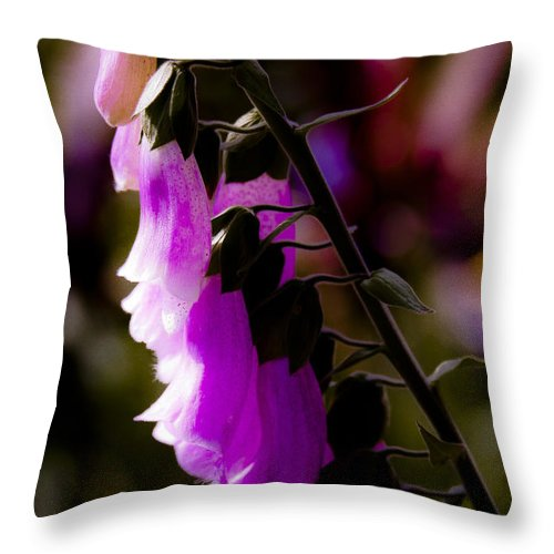Pink Throw Pillow featuring the photograph Soft Cascade by David Patterson