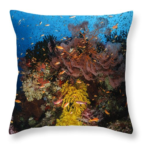 Anthias Fish Throw Pillow featuring the photograph Soft Coral And Sea Fan, Fiji by Todd Winner