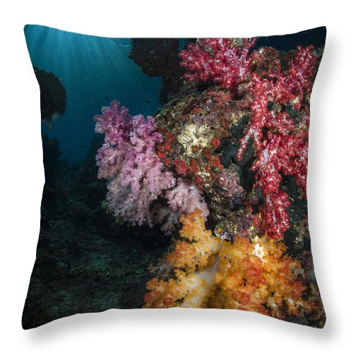 Raja Ampat Throw Pillow featuring the photograph Soft Coral And Sunburst In Raja Ampat by Todd Winner