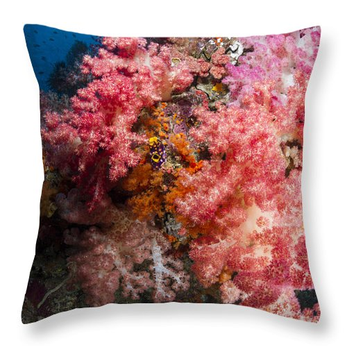 Raja Ampat Throw Pillow featuring the photograph Soft Coral In Raja Ampat, Indonesia by Todd Winner