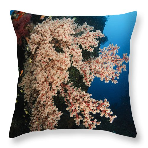 Liberty Wreck Throw Pillow featuring the photograph Soft Coral On The Liberty Wreck, Bali by Todd Winner