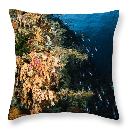 Ocean Throw Pillow featuring the photograph Soft Coral Seascape And Rainbow by Todd Winner