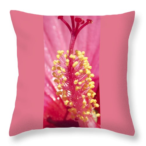 Photography Throw Pillow featuring the photograph Solo by Steven Natanson