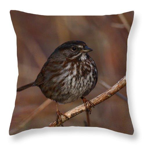 Doug Lloyd Throw Pillow featuring the photograph Song Sparrow by Doug Lloyd