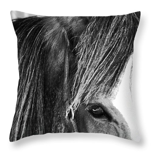 Horse Throw Pillow featuring the photograph Soul Mate Too by Traci Cottingham