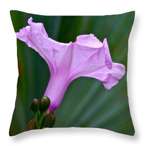 Morning Glory Throw Pillow featuring the photograph South American Morning Glory by Byron Varvarigos
