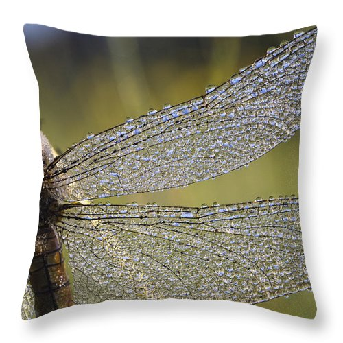 Mp Throw Pillow featuring the photograph Southern Skimmer Orthetrum Brunneum by Konrad Wothe