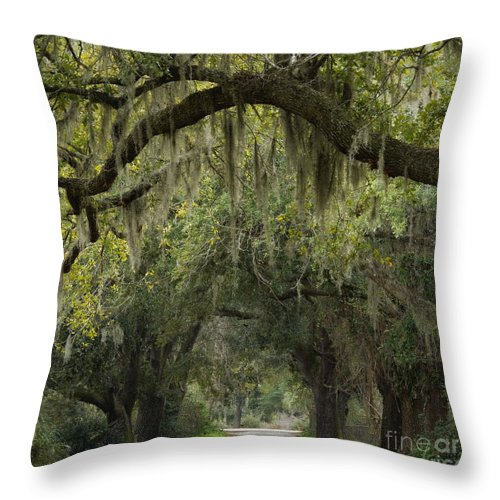 Road Throw Pillow featuring the photograph Spanish Moss - D002156 by Daniel Dempster