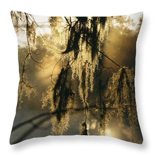 United States Of America Throw Pillow featuring the photograph Spanish Moss Hanging From A Tree Branch by Medford Taylor