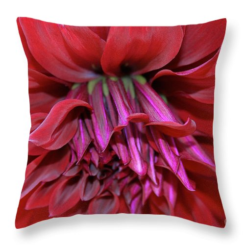 Outdoors Throw Pillow featuring the photograph Spartacus In Red by Susan Herber