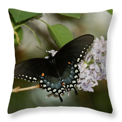 Butterfly Throw Pillow featuring the photograph Spice Bush Swallowtail On Lilac by Lara Ellis