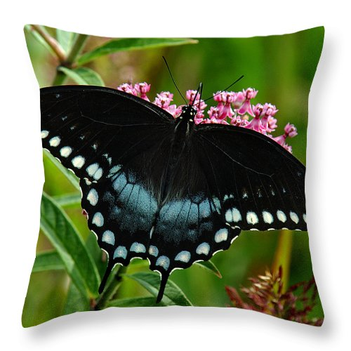 Nature Throw Pillow featuring the photograph Spicebush Swallowtail Din038 by Gerry Gantt