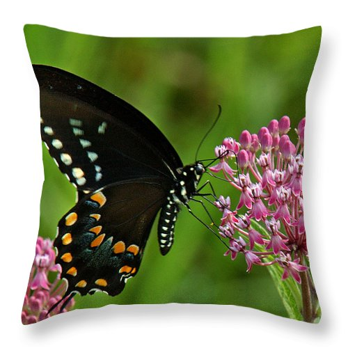 Nature Throw Pillow featuring the photograph Spicebush Swallowtail Din039 by Gerry Gantt