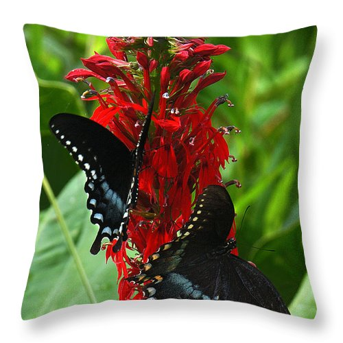 Ure Throw Pillow featuring the photograph Spicebush Swallowtails Visiting Cardinal Lobelia Din041 by Gerry Gantt