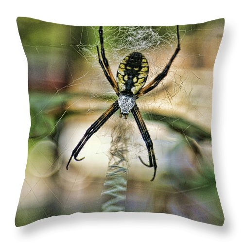 Spider Throw Pillow featuring the photograph Spider by Alan Hutchins