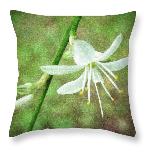 Floral Throw Pillow featuring the photograph Spider Plant Flower - Chlorophytum Comosum by Mother Nature