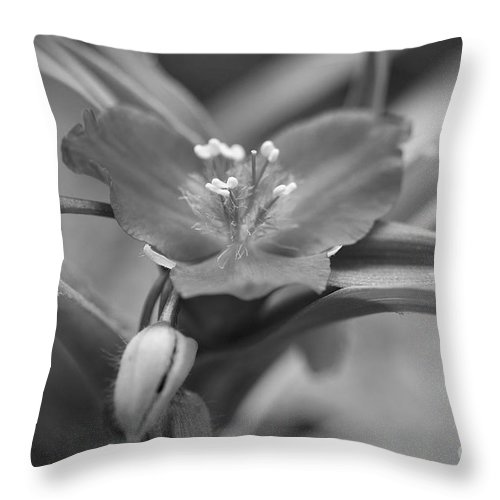 Purple Flower Photographs Throw Pillow featuring the photograph Spiderwort In Black by Brooke Roby