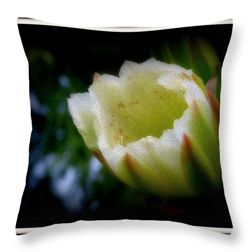 Cactus Flower Throw Pillow featuring the photograph Spike by Priscilla Richardson