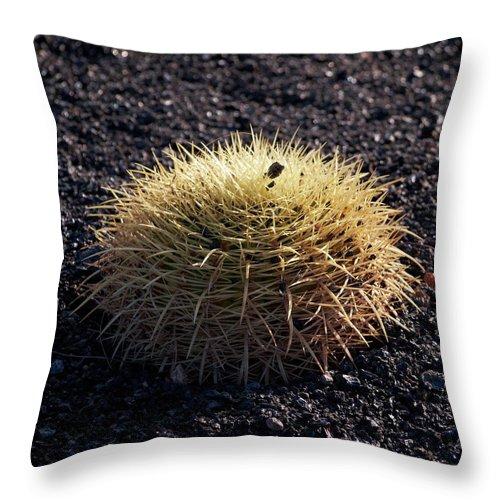 Lehtokukka Throw Pillow featuring the photograph Spiky by Jouko Lehto
