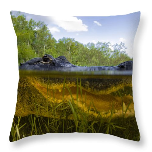 Alligator Throw Pillow featuring the photograph Split Level View Of An American by Todd Winner
