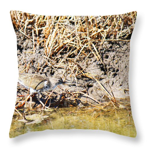 Actitis Macularia Throw Pillow featuring the photograph Spotted Sandpiper At The Canal by Roena King