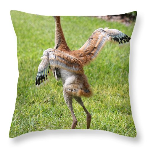 Sandhill Crane Throw Pillow featuring the photograph Spread Your Wings And Try To Fly by Carol Groenen