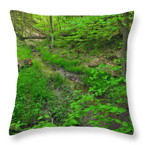Spring Throw Pillow featuring the photograph Spring At Cleveland Metro Park by Joan Minchak